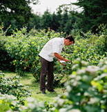 Dunbrody Country House Hotel & Restaurant, Co. Wexford, Ireland - Kevin in the Vegetable Garden